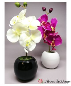 Small Potted Orchid available in Cream or Pink Flowers